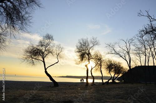 Sahil de  ağaç  silüetleri Poster
