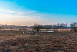 Three horses feeding on hay in winter