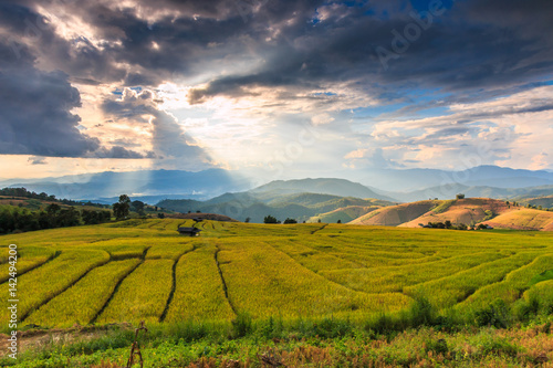 Fotobehang Paddy field or rice field in Mae Jam village, Chaingmai province of Thailand