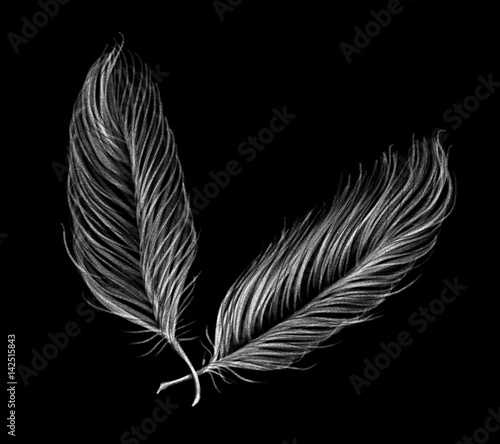 Drawn by pencil black set of feathers on the black background, isolated illustration by hand, high quality © Iryna