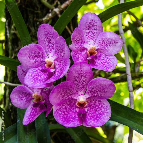 Poster Orchidea a Singapore