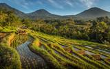 Rice Field Farming