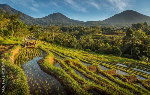 Keuken foto achterwand Bali Rice Field Farming