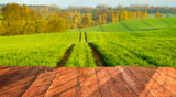 wooden desk top and spring,green field