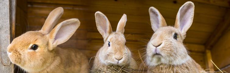 rabbits in a hutch © Vera Kuttelvaserova