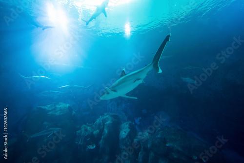 Shark in the ocean Poster