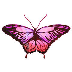 pink butterfly,watercolor,isolated on a white