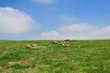 Simple spring landscape, Alava, Basque country