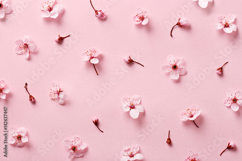 Flower blossom pattern on pink background. Top view Poster
