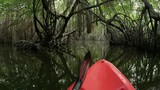 Moving slowly on canoe through natural tunnel of mangrove forest vegetation. Amazing tropical nature adventure background - 142653630