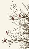 birds on the tree branches in the springtime