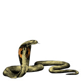 snake spectacled Cobra crawling, sketch vector graphics color picture - 142696648