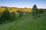 Summer landscape with birch forest