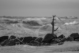 Skagen coast