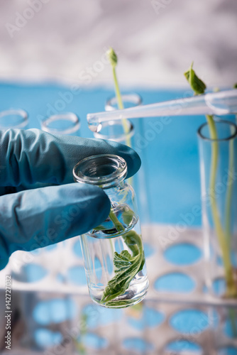 Scientist hold the test tube with plant in biotechnological laboratory. Concept of genetic engineering