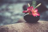 Vase of plumeria or frangipani flower on soft and blurred background