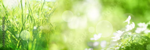 Bright green spring panorama background Poster