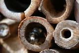 Gesicht der Biene
