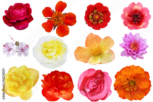 Flower Head Collage Poster