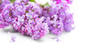 Lilac flowers bunch over blurred background