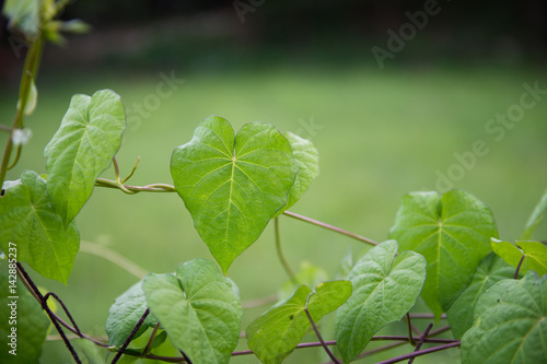 Closeup of fresh green leaves on natural background. Poster