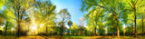 Fototapety Gorgeous panoramic spring scenery with the sun beautifully illuminating the fresh green foliage