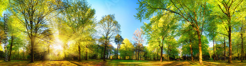 Staande foto Pistache Gorgeous panoramic spring scenery with the sun beautifully illuminating the fresh green foliage
