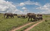 Herd of african elephants - Kenya, Africa