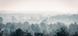 Pine winter forest in mist. © ysbrandcosijn