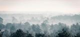 Pine winter forest in mist. - 142936691