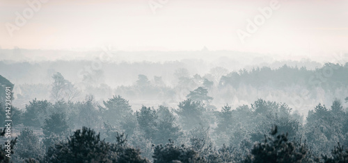 Pine winter forest in mist. - 142936691