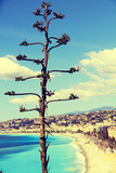 Tropical tree against panoramic of Nice, France. Selective focus