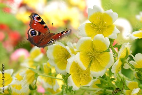 Butterfly 288