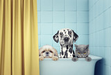 two dogs and cat in the bath - 143010084