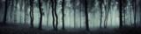 dark forest panorama...