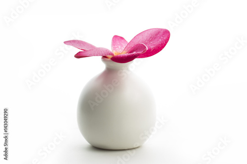 Plexiglas Plumeria Frangipani Flower