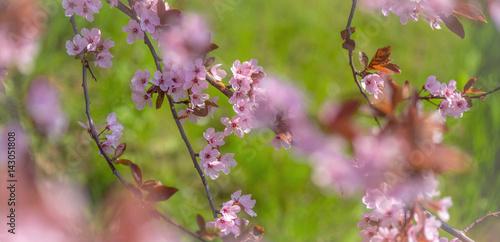 Poster Frühlingserwachen in der Natur, Mandelblüte, Kirschblüte,