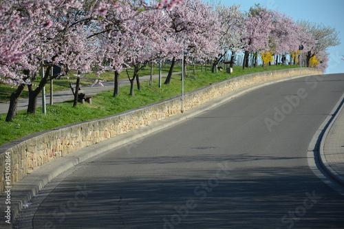 Poster Mandelblüte an der Deutschen Weinstraße