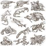 Animals in action, Predators - An hand drawn full sized illustrations. Collection on white. - 143057879