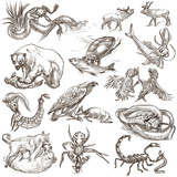Animals in action, Predators - An hand drawn full sized illustrations. Collection on white. - 143058029