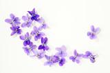 Veilchenblüten - 143061056