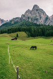 Gorgeous mountainscape with cabin and black horse, Italy
