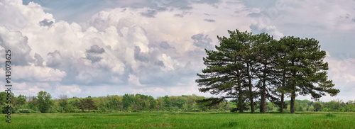 Spring landscape with green grass, fir trees and clouds.