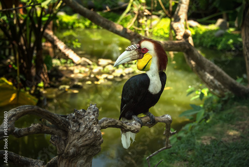 Colorful Toucan sitting among green leaves on branch in tropical forest Poster