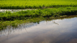Spring landscape stream and meadow grass