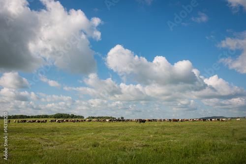 Russian Farm