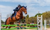 Equitation, saut d'obstacles, compétition. - 143120642