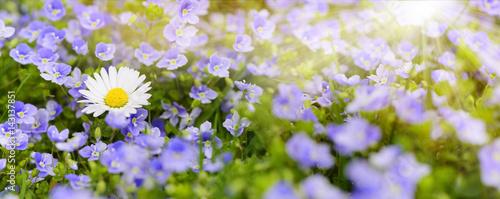 Bunte Blumenwiese im Frühling und Sonnenstrahlen - 143137851
