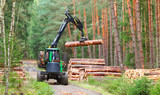The harvester working in a forest. Harvest of timber. Firewood as a renewable energy source. Agriculture and forestry theme.  - 143159255