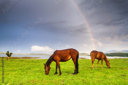 Poster Horses under the rainbow